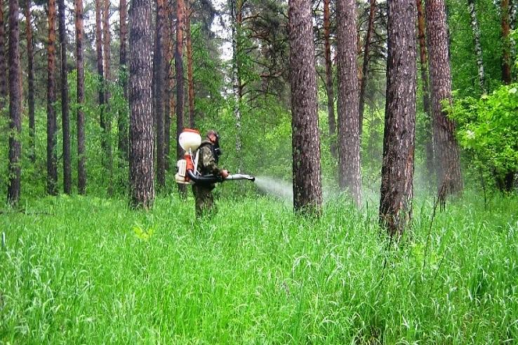Обработка от клещей лесных массивов в Новокузнецке